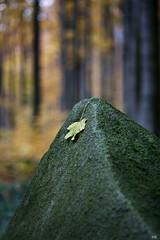 Die Bltter fallen (*altglas*) Tags: blatt bltter baumundblatt