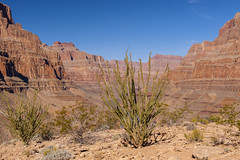 Grand Canyon (Giuseppe Baldan) Tags: