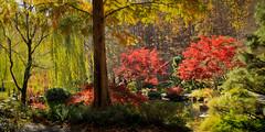 Fall Panaramic (Joe Szalay) Tags: autumn trees color fall georgia gibbsgardens gibbsgarden