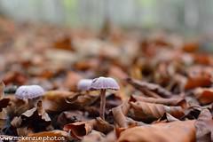Mushrooms in the leaves (The Urban Adventure) Tags: mushroom 35mm woodland kent nikon canterbury fungi fungus lowepro d7100 dengewoods