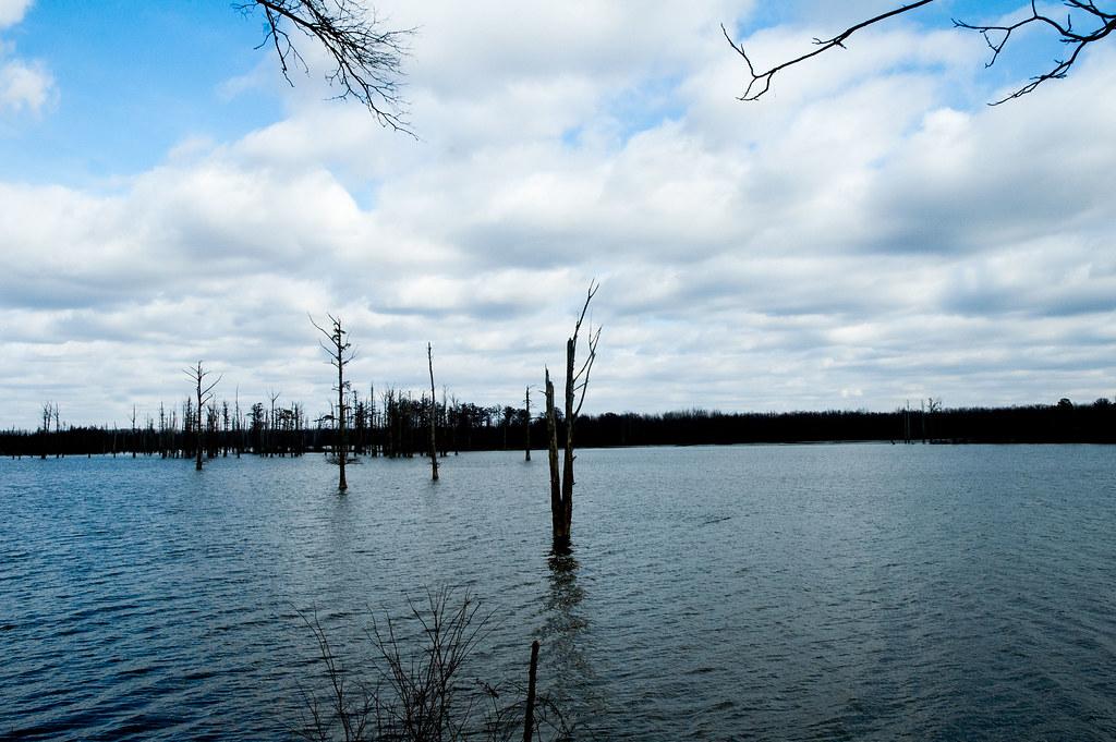 Hovey lake fish wildlife area january 6 2015 for Fish lake indiana