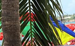 Great Bay Beach Palm Tree, Saint Martin (Bella Lisa) Tags: beach saintmartin sand caribbean umbrellas greatbaybeach
