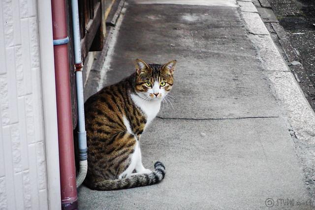 Today's Cat@2014-11-24
