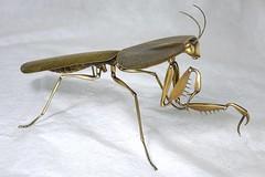 Choerododis rhombifolia (geoffrey_haberman) Tags: mantis handmade sony brass metalsculpture mantid focusstack rx10 handfabricated heliconfocus allistonontario geoffreyhaberman insectsculpture metalinsect choerododisrhombifolia insectmetalsculpture sonydscrx10