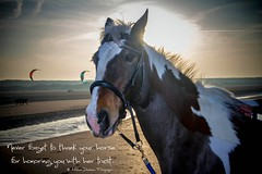 Never forget to thank your horse for honoring you with her trust. (Michel_Derksen) Tags: sea horse beach faith trust horsehead irishcob