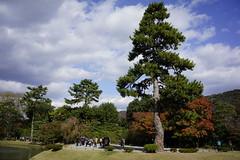 (ddsnet) Tags: travel plant japan sony autumnleaves resolution  nippon   autumnal nihon  ilc backpackers        7r kyotofu mirrorless    interchangeablelenscamera  7r ilce7r