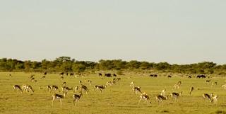 Botswana Hunting Safari Lodge 2