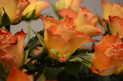 Flowers.. (davidheath01) Tags: flowers nature dslr nikond5100 nikon amateur