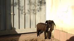 10609 - Cesira (Diego Rosato) Tags: animali cani cesira
