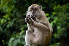 Monkey moment (orion_Katerina) Tags: trip travel asia explore malaysia discover
