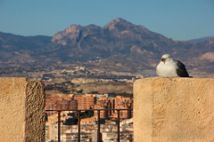 On watch (Pepper@ncini) Tags: mountain mountains bird canon outdoors spain view alicante