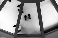Point of view (Giulio Gigante) Tags: street people blackandwhite bw italy rome roma nikon italia persone pointofview di vista alto punti giulio basso gardin berengo d5100 topnikon giulionikon