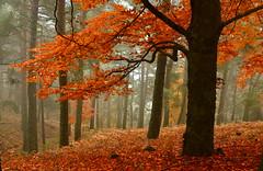 Foggy fall (Juampiter) Tags: