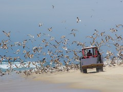 Birdbeach (Harm Smit photo's) Tags: tractor beach portugal strand vogels mira meeuwen trekker