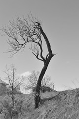 Tree in black and white by ioanna papanikolaou (joanna papanikolaou) Tags: blackandwhite bw plants tree nature beautiful outdoors day alone empty nobody scene minimal greece land environment lonely prespes