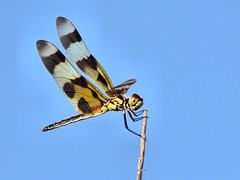 Halloween Pennant HDR 20160524 (Kenneth Cole Schneider) Tags: florida miramar westbrowardwca