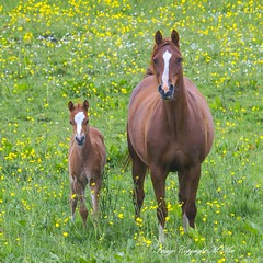 Mother & child. (nondesigner59) Tags: horse nature motherchild equine foal nondesigner nd59 copyrightmmee eos7dmkii