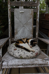 Peggy the Cat (Garry Malyon) Tags: cornwall lostwithiel holiday2016 duchygardencentre