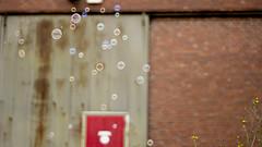 Glckstage (carla_hauptmann) Tags: travel summer germany happy deutschland 50mm sommer sony bubbles journey bremen reise ontour a77 glcklich seifenblasen f17