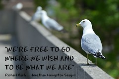 .... Travel, Seek Freedom, Know Your Identity, Find Peace .... (Greg's Southern Ontario (catching Up Slowly)) Tags: bird quote seagull jonathanlivingstonseagull torontocityhall richardbach torontoist jonathanlivingstonseagullquote