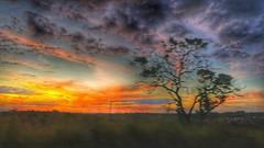 fall in love (Rodrigo Alceu Dispor) Tags: road sunset sky cloud tree fall love fx