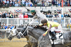 Creator, winner of the 2016 Belmont Stakes (Rock and Racehorses) Tags: ny belmont creator destin stakes elmont ska6528sarahandrew