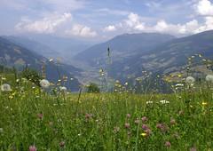 Vorderes Zillertal (bookhouse boy) Tags: mountains alps berge alpen zillertal ramsau 2016 zillertaleralpen sonnalm gerlossteinalm ramsberg 25juni2016 gerloskögerl