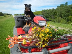 On the road again! (Jeannette Greaves) Tags: wild flower jeannette picking 2016 decto ditchbeauties