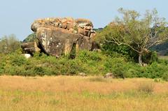 PWS_6863 (paulshaffner) Tags: dorobo safaris dorobosafaris serengeti safari studyabroad education abroad tanzania penn state pennstate biology pennstatebiology