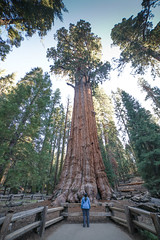 CA-CO (35 of 60) (codywellons) Tags: sequoia national park california nature kings canyon trees a7ii