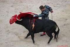 Juan Bautista (Bernard Bost) Tags: 2016 canon arles provence paca corrida friaduriz corridagoyesque toro juanbautista