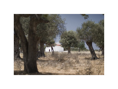 Hill Church (Furious Zeppelin) Tags: furiouszeppelin fz cyprus aphrodite hill church olive trees
