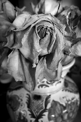 (288/366) Rose (CarusoPhoto) Tags: bw iphone 7 plus john caruso carusophoto photo day project 365 366 rose faded flower