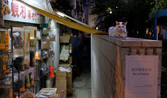 """no urination!"" (hugo poon - one day in my life) Tags: xt2 23mmf2 hongkong saiyingpun sutherlandstreet citynight longnight solitude cat vanishing chinesemedicine sign onlooker onlooking lane backalley"