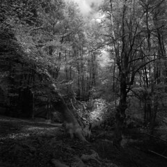 Barrow Moor gully (Skink74) Tags: 120 6x6 barrowmoor blackandwhite bolderwood bronica england film filmdev:recipe=8005 forest hampshire infrared infrared400 newforest r72 rodinal rollei s2a s2am079 standdevelopment uk wood zenzabronicas2a zenzanonmc40mm14 mono bw trees stream fallen gully shadow light