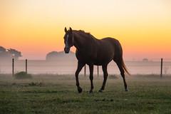 Misty morning (Infomastern) Tags: sdersltt animal countryside dawn dimma djur fog gryning horse hst landsbygd landscape landskap mist soluppgng sunrise exif:model=canoneos760d geocountry exif:focallength=110mm camera:make=canon geocity camera:model=canoneos760d geostate geolocation exif:lens=efs18200mmf3556is exif:isospeed=5000 exif:aperture=56 exif:make=canon