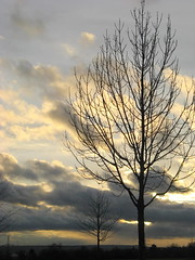 Herr, bei jedem Wort und Werke (amras_de) Tags: licht luz lig svjetlost llum svetlo lys light lumo valgus argi valo lumire solas fny lumine ljs luce lux liicht viesa gaisma lutz swiatlo lumina luci svetloba ljus isik baum tr stablo boom rbol drvo arbre strom tree arbo puu zuhaitz crann fa arbore tr albero arbor medis koks tre drzewo rvore rvulu drevo trd aga wiesbaden