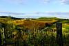 Chianti Classico, Tuscany (alliance1) Tags: italy color landscape vineyard afternoon tuscany chianticlassico 2014 fujix100s