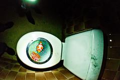 PUTAIN Y A UN POISSON DANS LES CHIOTTES! (nARCOTO) Tags: toilet wc urbex chiottes