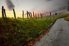 _DSC1310 (andoni.guridi) Tags: autumn fall spain otoño navarra 2014 basaburua