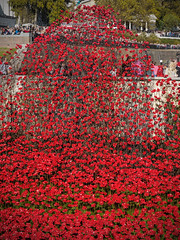 Field of Remembrance (davepickettphotographer) Tags: city uk red sea london tower art field dead memorial war hill wave olympus poppies gb british lands remembrance 1914 toweroflondon legion westminister cityoflondon em1 19141918 olympuscamera cityofwestminister bloodswept