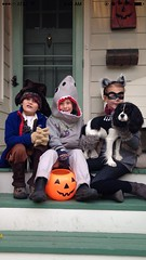 """The Chase's Trick or Treat! • <a style=""""font-size:0.8em;"""" href=""""https://www.flickr.com/photos/72564046@N04/15587428339/"""" target=""""_blank"""">View on Flickr</a>"""