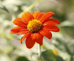 2014 11 03 Tucson Botanical Gardens 114 (GaryS42) Tags: arizona flower gardens botanical tucson tucsonbotanicalgardens ttucsonarizona