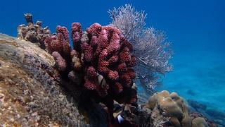 Snorkeling - Seychelles - Octobre 2014 (45)