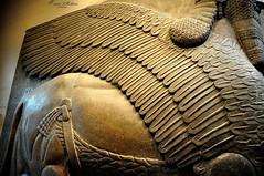 Lamassu (Sumer and Akkad!) Tags: iraq winged thebritishmuseum mesopotamia lamassu ashurnasirpal nimrud kalhu humanheadedlion northwesrpalace