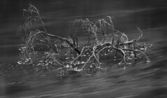 Flowing Past (Ludvius) Tags: white black and flowing past ludovicophotography wwwludovicophotocom