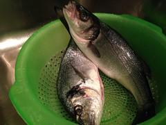 IMG_0746 (andreaGalle) Tags: fish pesci pesce orata spigola