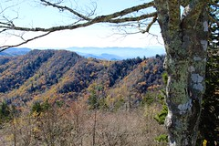 Lichen tree view (daveynin) Tags: tree fall season branch nps tennessee northcarolina foliage lichen overlook greatsmokymountains deaftalent deafoutsidetalent deafoutdoortalent