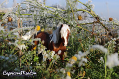 Breyer Classics - Silver Bay Mustang nr 934 (capricornmeadow) Tags: horse model classics mustang breyer