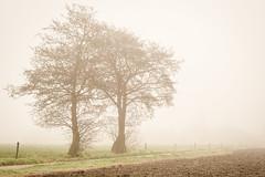 (Kathleen Van Hamme) Tags: mist wandelen natuur landschap ursel landschapsfotografie